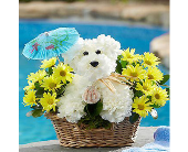 Doggie Paddle� in Hillsboro OR, Marilyn's Flowers