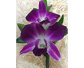 Purple Orchid Boutonniere in Palm Beach Gardens FL, Floral Gardens & Gifts