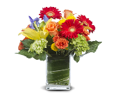 DANCE WITH ME in Gainesville FL, Floral Expressions Florist
