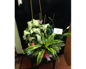 FBAS1 in Missouri City, Texas, Flowers By Adela