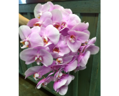 Phalaenopsis Wedding Bouquet in Austin TX, Ali Bleu Flowers