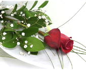 Roses Wrapped in Timmins ON, Timmins Flower Shop Inc.