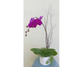 Orchid Planter in Redmond WA, Bear Creek Florist