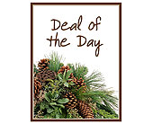 Deal of the Day - Winter in Cicero NY, The Floral Gardens
