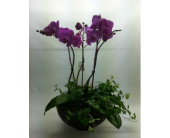 Divine purple orchid in Quincy, Massachusetts, Fabiano Florist