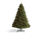 Apache Slim Pine Tree NOW 70% Off in Little Rock AR, Tipton & Hurst, Inc.