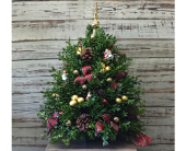 Boxwood Tree in Westport CT, Hansen's Flower Shop & Greenhouse