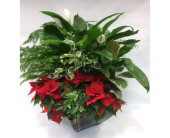 Large Holiday Planter in Belleville ON, Live, Love and Laugh Flowers, Antiques and Gifts