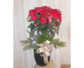 Poinsettia Tree in Dallas TX, Petals & Stems Florist