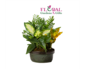 Dish Garden Small in Palm Beach Gardens, Florida, Floral Gardens & Gifts