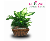 Dish Garden Medium in Palm Beach Gardens FL, Floral Gardens & Gifts