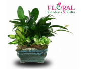 Dish Garden Large in Palm Beach Gardens, Florida, Floral Gardens & Gifts