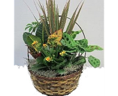 Forest Planter in Timmins ON, Timmins Flower Shop Inc.