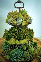 Tiered Succulents in Kentfield, California, Paradise Flowers
