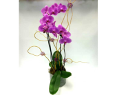 Double Stemmed Orchid in Belleville ON, Live, Love and Laugh Flowers, Antiques and Gifts