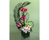Modern Roses and Orchids in Aventura FL, Aventura Florist