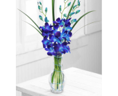 Blue Dendrobium Orchids in a Vase, picture