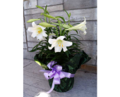 EASTER LILY (triple) in Muskegon MI, Wasserman's Flower Shop
