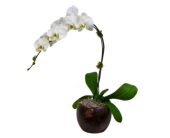 PURE ORCHID in Needham MA, Needham Florist