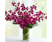 Orchid Sensation in Largo FL, Rose Garden Florist