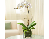 Orchid Brilliance in Largo FL, Rose Garden Florist