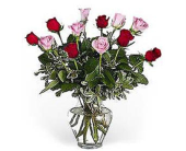 12 Pink and Red Roses in Bound Brook NJ, America's Florist & Gifts