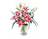 Purely Stargazers in Bound Brook NJ, America's Florist & Gifts