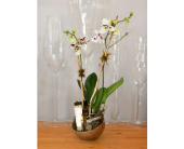 Modern Orchid in Metal Globe in Oakville ON, Margo's Flowers & Gift Shoppe