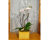 White Rustic Orchid in Oakville ON, Margo's Flowers & Gift Shoppe