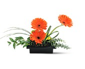 Teleflora's Zen Gerbera Bowl in North Manchester IN, Cottage Creations Florist & Gift Shop