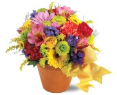 Teleflora's Fresh Blossom Potpourri in Watertown NY, Sherwood Florist