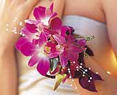 Fushia Orchids Wristlet in St. Louis MO, Walter Knoll Florist