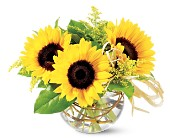 Teleflora's Sassy Sunflowers in Ontario CA, Rogers Flower Shop