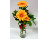 Autumn Gerbera Daisies in Belleville ON, Live, Love and Laugh Flowers, Antiques and Gifts