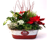 Holiday Cheer in Grimsby ON, Cole's Florist Inc.