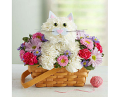 Happy Cat in Aston PA, Wise Originals Florists & Gifts