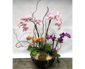 Orchid Combo in Belleville ON, Live, Love and Laugh Flowers, Antiques and Gifts