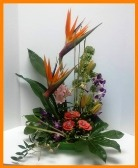 Tropics Remembered in Hamilton ON, Joanna's Florist