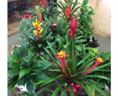 Bromeliads in Derby KS, Mary's Unique Floral & Gift