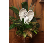 Angel Dish Garden in Myrtle Beach SC, La Zelle's Flower Shop