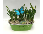 Butterfly Bulb Planter in Belleville ON, Live, Love and Laugh Flowers, Antiques and Gifts