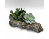 Small Succulent Garden in Belleville ON, Live, Love and Laugh Flowers, Antiques and Gifts