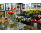 Designer's Choice in Worcester, Massachusetts, Holmes Shusas Florists, Inc