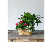 Double Plant Basket in College Station, Texas, Postoak Florist