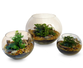 Thoughtful Terrariums in Indianapolis IN, Enflora
