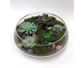 Succulent Bowl in Belleville ON, Live, Love and Laugh Flowers, Antiques and Gifts