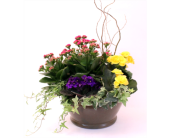 Eden Garden (Lg) in Grimsby ON, Cole's Florist Inc.