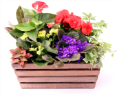 Colourful Garden Box in Grimsby ON, Cole's Florist Inc.