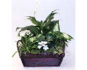 White Peace Basket Sm. in Grimsby ON, Cole's Florist Inc.
