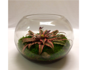 Bromeliad Terrarium in Chicago IL, Wall's Flower Shop, Inc.